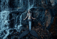 The real mermaid. Is resting on the ocean shore. Silver tail, the body is covered with scales. Creative colors Stock Photography