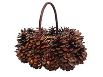 Real Native pine cones basket lower view Stock Photo