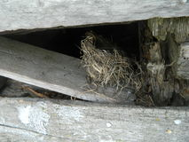 Real natural bird nest Royalty Free Stock Image