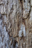 Real and nature wood texture. Background Royalty Free Stock Image