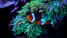 Most popular fish are more and more interesting to have and enjoy in them in our aquariums Royalty Free Stock Photo