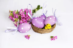 Real nest with purple easter  eggs and yellow chickens Royalty Free Stock Images
