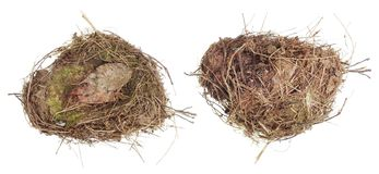 The real nest of a wild forest bird is made of dry grass and mos Stock Photo