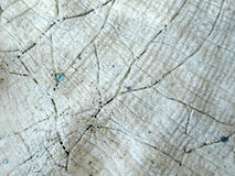 Real Old Seashell Texture. An old seashell, cracked, worn and faded from the sun. Useful as a background, layer or texture stock images