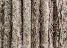 Real old tree texture Stock Photos