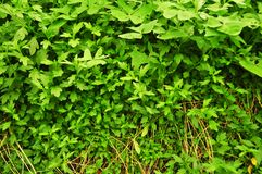 Real organic green vegetables backgrounds stock images