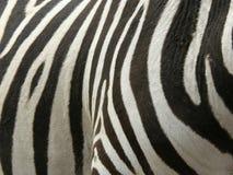 real paskuje zebry Obraz Royalty Free