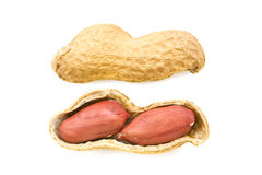 Real peanut Stock Images