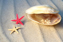 Real pearls in a sea shell and starfishes Stock Images