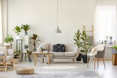 Real photo of a botanic living room interior full of plants with. A grey couch standing behind a wooden table and under a lamp, with two chairs on the opposite royalty free stock images