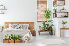 Real photo of a botanical bedroom interior with wooden shelves,. Tables, double bed, plants and empty wall next to a window with blinds. Place your painting royalty free stock photos