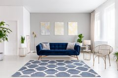 Real photo of bright living room interior with royal blue couch, three simple paintings, window with curtains and fresh plants royalty free stock images