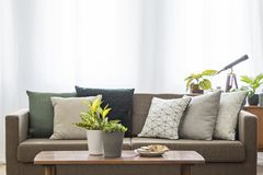 Real photo of a couch with pillows standing behind a table with. Plants in living room interior stock images