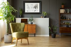 Real photo of dark living room interior with green armchair, vintage cupboards, fresh plants and poster on wall with wainscoting stock image