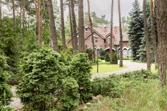 Real photo of a forest with coniferous shrubs, trees and english. Style house royalty free stock images