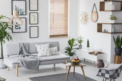 Real photo of a grey living room interior with a sofa, plants, fruit in a bowl and paintings stock images