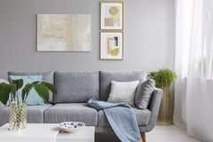 Real photo of a grey sofa standing in a stylish living room interior behind a white table with leaves and in front of a grey wall. With posters stock image