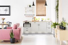 Real photo of open space kitchen interior with checkerboard floor, window with wooden blinds, pink velvet couch and many fresh pl. Ants stock photo