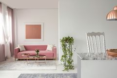 Pink couch, plant in a living room interior and open space kitchen island. Real photo of a pink couch, plant in a living room interior and open space kitchen royalty free stock images