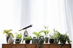 Real photo of the plants and a telescope standing on a wooden cu Royalty Free Stock Photography