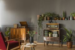 Real photo of a red armchair standing in front to a small cupboard with books and radio, shelf with plants and shelf with. Real photo of a red armchair standing royalty free stock photo