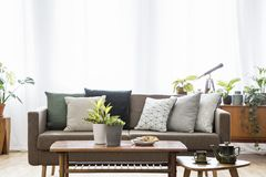Real photo of a sofa with cushions standing behind the tables in bright, vintage living room interior full of plants. Real photo of a sofa with cushions standing stock photos