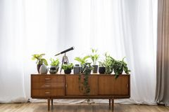 Real photo of a wooden cupboard with plants, pot and telescope s. Tanding in empty room interior with curtains behind it stock photo