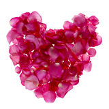 Real pink rose heart shape on white background Stock Images