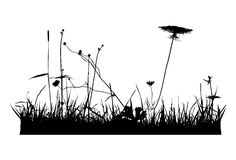 Real plant traced silhouettes, poppy - vector illustration Royalty Free Stock Photography
