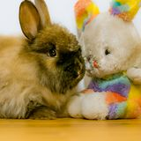 Real rabbit and toy easter bunny are best friends. stock photos