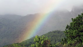 Real rainbow on tropical forest stock video footage