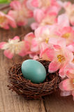 Real Robins Egg with Pink Spring Flowers Stock Photo