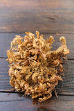Real rose of Jericho Stock Images