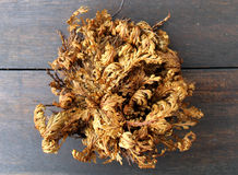 Real rose of Jericho Royalty Free Stock Image