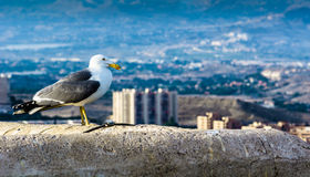 Seagull standing seems to control the city Stock Photos