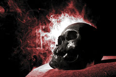 Real skull Royalty Free Stock Images