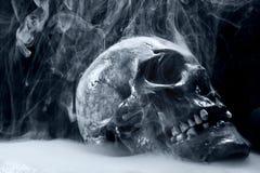 Real skull Stock Photos