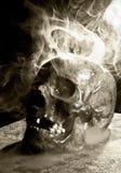 Real skull Stock Image