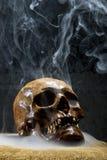 Real skull Royalty Free Stock Photography