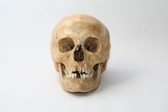Real skull of human Stock Photo