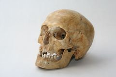 Real skull of human Royalty Free Stock Photos