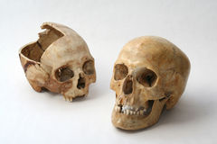 Real skull of human Royalty Free Stock Images