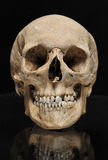 Real skull human on a black background Royalty Free Stock Photo