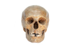 Real skull of human. Isolated. Royalty Free Stock Photography