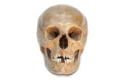 Real skull of human. Isolated. Stock Photo