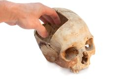 Real skull. Take out a brain! Isolated. Stock Photos