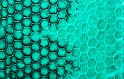 Real snake skin background, macro shot Stock Images