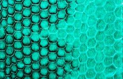 Real snake skin background, macro shot Stock Images
