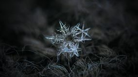Real snowflake glowing on dark textured background Stock Photos