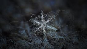 Real snowflake glowing on dark textured background Royalty Free Stock Image